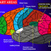 Neuroplasticity: How to Change Your Brain